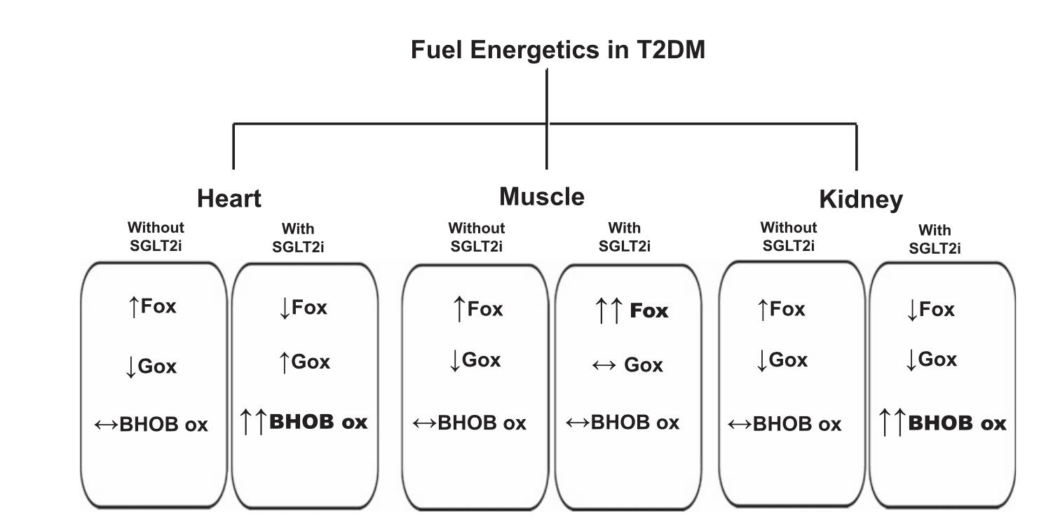 SGLT2i改變能量應用